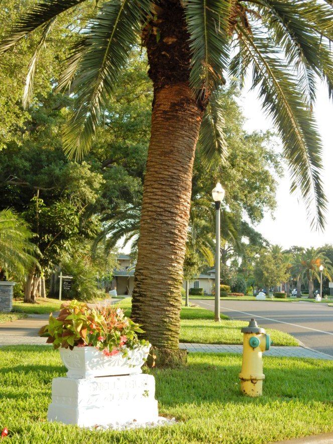 Florida Landscaping, curb appeal, hgtv, outdoor landscaping, St. Petersburg, St. Pete, Florida, Colorful front doors, front doors, design inspiration, landscaping, home exteriors, Sarah In Style, Sarah Meyer, Come and knock on my door, come & knock on my door, home inspiration, home design, florida architecture, St. Petersburg FL Homes, Florida Homes, Florida Architecture, Cool Florida Homes